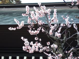 2008_0322_さくら.jpg