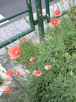 2008_0421_道ばたの花.jpg